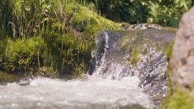 Molhe o rio que flui no córrego bonito do rio do cenário da floresta nas montanhas vídeos de arquivo
