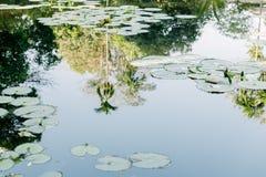 Molhe a reflexão na lagoa de lótus em um dia ensolarado imagem de stock