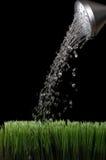 Molhe sprinking de uma lata molhando do jardim de prata Fotografia de Stock
