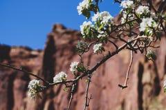 Molhe suas raizes assim que sua alma pode florescer fotografia de stock
