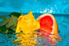 Molhe uma rosa uma pamplumossa Imagens de Stock