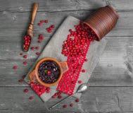 Molho caseiro do Lingonberry Fotos de Stock