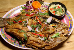Molho Mexican American Tailândia do estilo do taco Fotografia de Stock