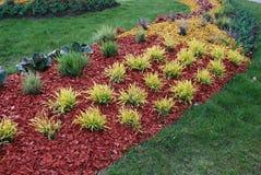 Molinia caerulea 'Variegata' on the flower bed. Stock Photos
