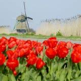 Molino de viento con el campo del tulipán fotografía de archivo