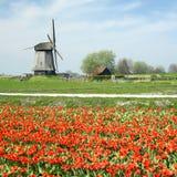 Molino de viento con el campo del tulipán Imagen de archivo