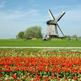 Molino de viento con los tulipanes Fotos de archivo libres de regalías