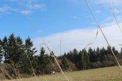 Molino de viento detrás del treeline Foto de archivo