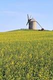 Molino de viento en campo de flor Fotos de archivo