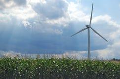 Molino de viento en campo de maíz Foto de archivo