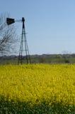 Molino de viento en campo del Canola Fotos de archivo