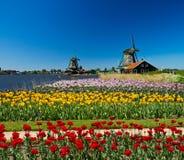 Molino de viento en Holanda Fotos de archivo libres de regalías