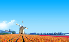 Molino de viento en la granja amarilla del bulbo del tulipán imágenes de archivo libres de regalías