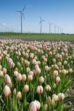 Molino de viento en los campos con las flores Imagenes de archivo