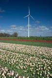 Molino de viento en los campos con las flores Foto de archivo