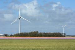 Molino de viento en los campos con las flores Fotografía de archivo libre de regalías