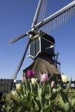 Molino de viento holandés tradicional con los tulipanes en Leiderdorp, Holanda Foto de archivo