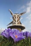 Molino de viento tradicional con el azafrán del resorte en frente Imagen de archivo libre de regalías