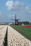 Molino de viento viejo con los tulipanes Imagen de archivo