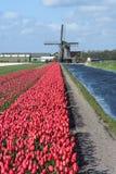 Molino de viento viejo con los tulipanes Foto de archivo
