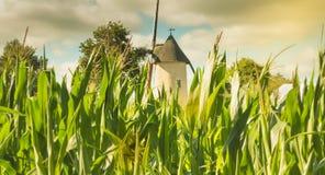Molino de viento viejo ocultado detrás de mazorcas de maíz verde Fotos de archivo libres de regalías