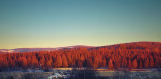 Molino de viento y bosque rojo Fotos de archivo