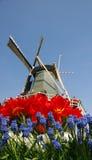 Molino de viento y flores Imagen de archivo libre de regalías