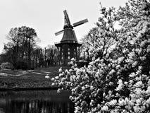 Molino de viento y flores foto de archivo