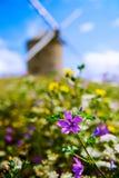 Molino de viento y flores en Beauvoir en Normandía, Francia Imagen de archivo libre de regalías