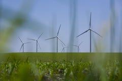 Molinoes de viento en campos de maíz Imágenes de archivo libres de regalías