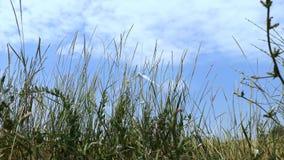 Molinoes de viento en uno de los campos de trigo de Ucrania Concepto ahorro de energ?a almacen de metraje de vídeo