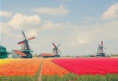 Molinoes de viento holandeses sobre tulipanes Imágenes de archivo libres de regalías