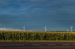 Molinoes de viento que se colocan en campo de maíz Paisaje rural hermoso con los molinoes de viento Fotografía de archivo