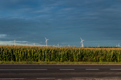 Molinoes de viento que se colocan en campo de maíz Paisaje rural hermoso con los molinoes de viento Imagen de archivo libre de regalías