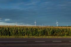 Molinoes de viento que se colocan en campo de maíz Paisaje rural hermoso con los molinoes de viento Imágenes de archivo libres de regalías