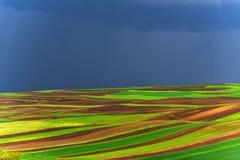 Molinos viejos del adnd del campo del tulipán en netherland Fotografía de archivo libre de regalías