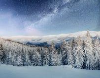 Molkerei Star Trek im Winterholz Drastische und malerische Szene In Erwartung des Feiertags Stockfotografie