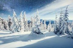 Molkerei Star Trek im Winterholz Drastische und malerische Szene In Erwartung des Feiertags Lizenzfreie Stockfotografie