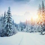Molkerei Star Trek im Winterholz Drastische und malerische Szene In Erwartung des Feiertags Lizenzfreie Stockbilder