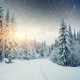 Molkerei Star Trek im Winterholz Drastische und malerische Szene In Erwartung des Feiertags Stockbild