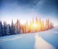 Molkerei Star Trek im Winterholz Drastische und malerische Szene In Erwartung des Feiertags Lizenzfreies Stockfoto