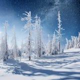 Molkerei Star Trek im Winterholz Drastische und malerische Szene In Erwartung des Feiertags Stockfoto