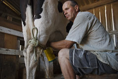 Molkereilandwirt, der eine Kuh milk. Lizenzfreie Stockbilder