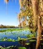 Molla blu, Florida Fotografia Stock Libera da Diritti