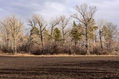 Molla degli alberi del campo arabile Fotografia Stock Libera da Diritti