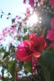 Molla del fiore Fotografia Stock Libera da Diritti