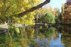 Molla del fiume circondata dalla natura non contaminata fotografia stock libera da diritti