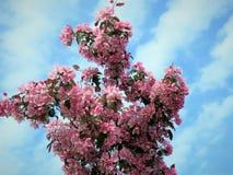 In molla dell'Estonia Blu 2018 della radura del cielo di colore di Sakura royalty illustrazione gratis