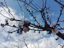 Molla della raccolta del fiore Fotografia Stock Libera da Diritti