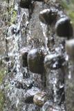 Molla di acqua Fotografia Stock